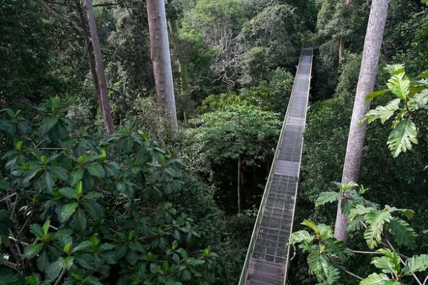 Canopy walk. Rainforest Discovery Centre