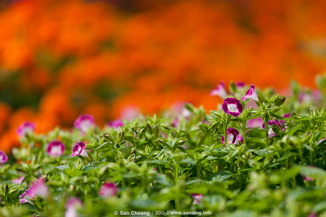 flower_Tapseac-0197