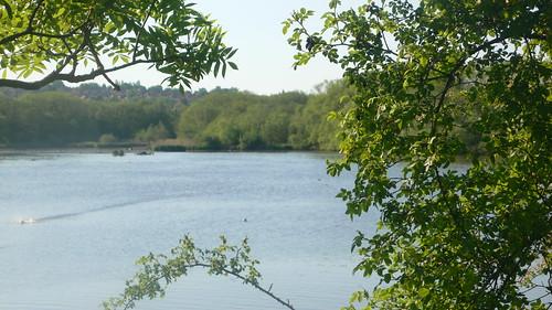 Welsh Harp reservoir