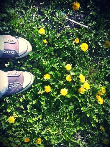 in a field of dandelions