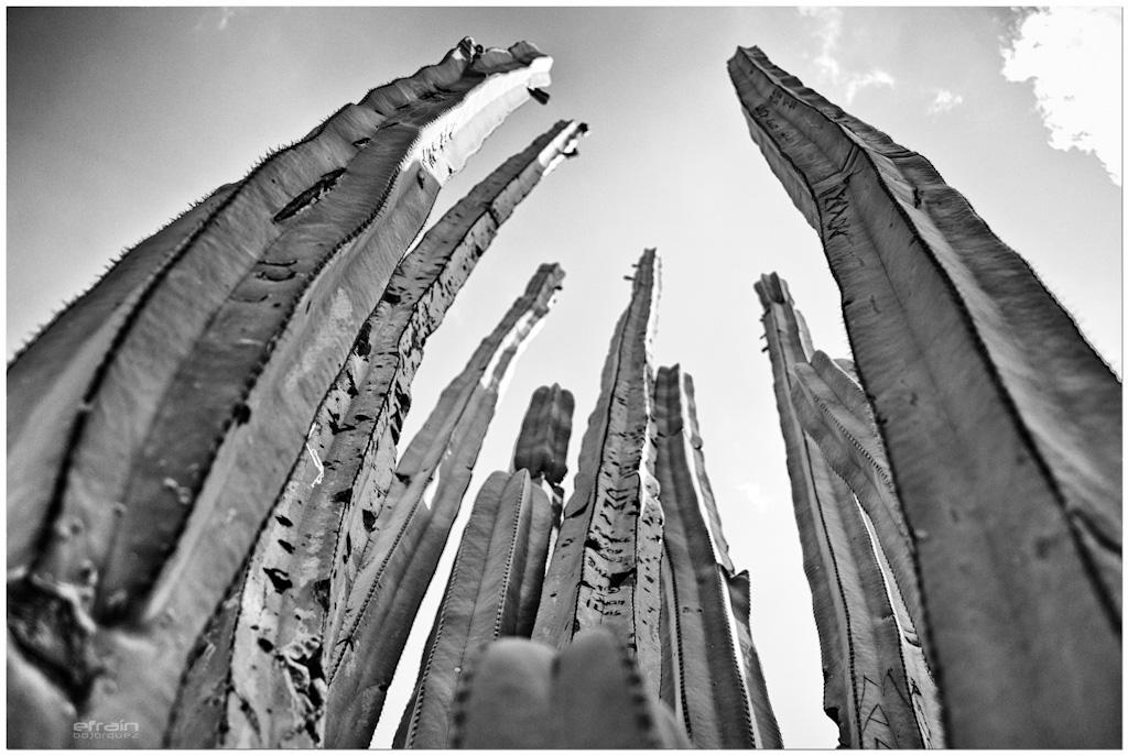 2012-04-20: Requiem por un cactus