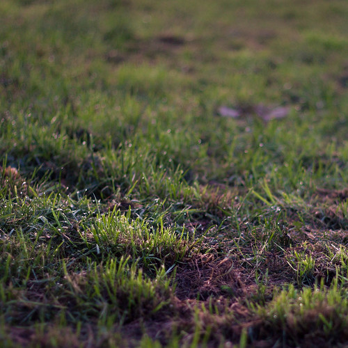 grass in the morning
