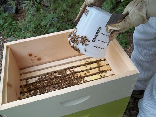 Good bees!