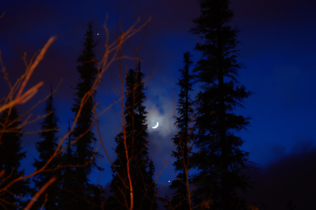 Conjunction through the trees