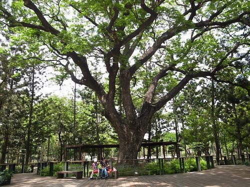 【寫生】台南公園可愛的駐警處:原 臺南公園事務所(7.8ys)