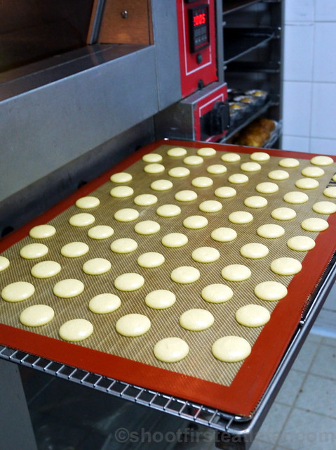 macaron shells from the oven