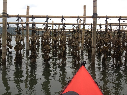 牡蠣棚は徐々に復活してる様でした。