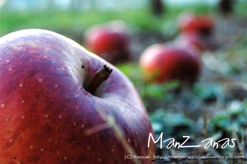 Perspectiva de manzanas
