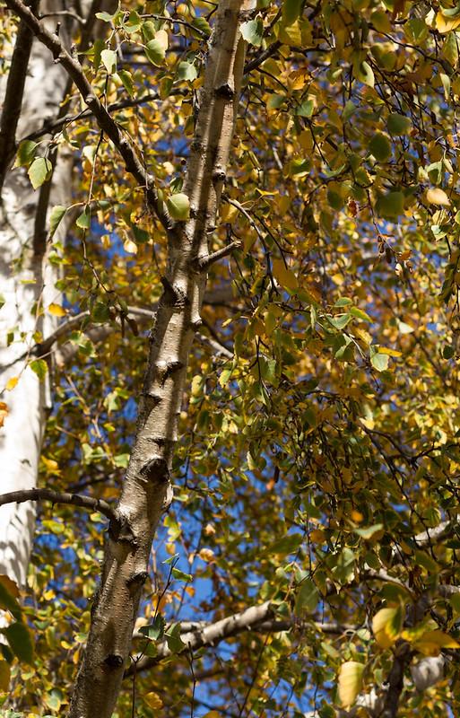 Autumnleaves2012-3717
