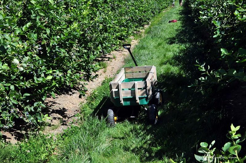 Emma Lea Farms Delta BC 00022