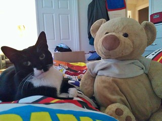 Butter the bear sitting next to Kisu the cat