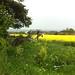 Overlooking East Challow