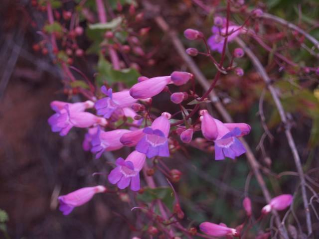 Funereal Flowers