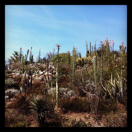 hill o' cacti
