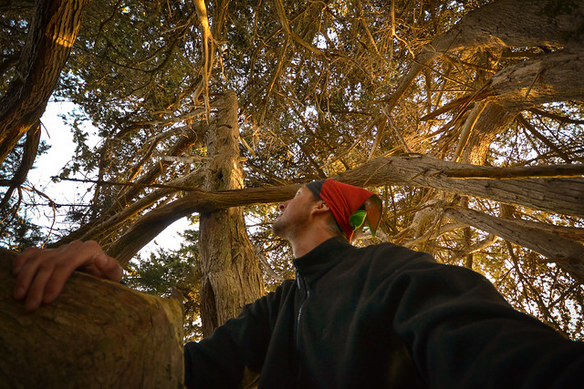 In the canopy