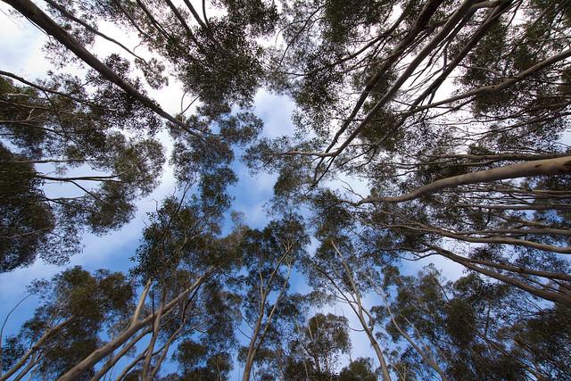 Reach for the sky 2012-06-17 (_MG_9503)