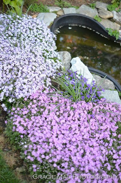 1204_spring_034