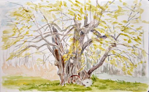 Iler Farm Jesuit or Joshuah Pear Tree by photographerpainterprintmaker