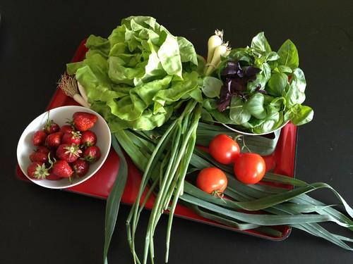 Amelishof organic CSA vegetables week 23, 2012