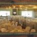 09_evento Hotel Fazenda Ácqua Lokos