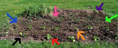 Garden Edited