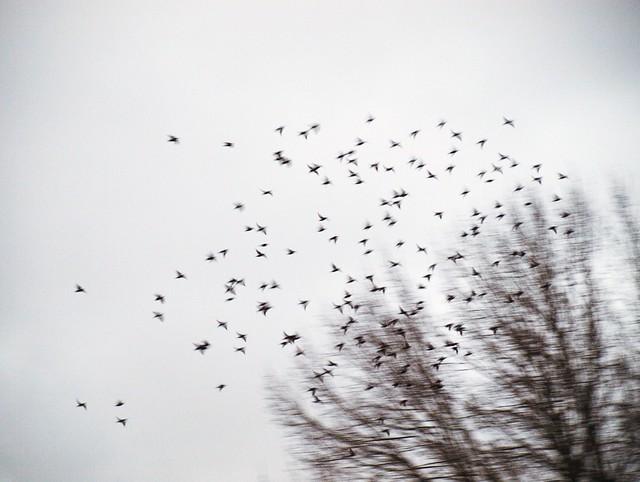 Vogeltanz (13)