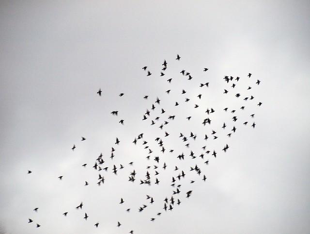 Vogeltanz (10)