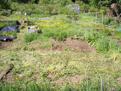 Our allotment right now