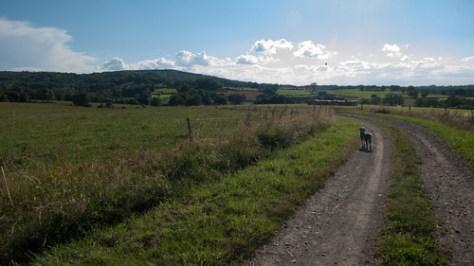 Landscape with dog
