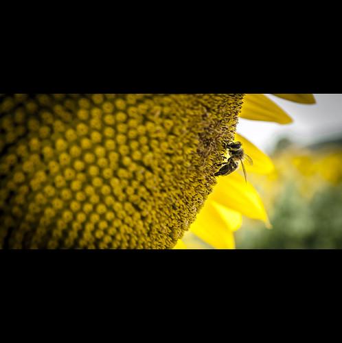 Busy bee bie