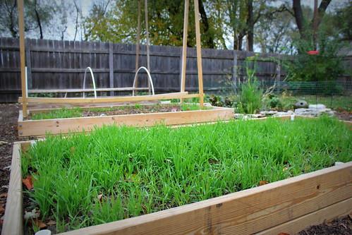 20121103. Winter garden.
