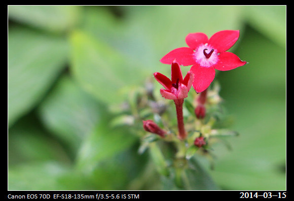 20140315_Flowers2