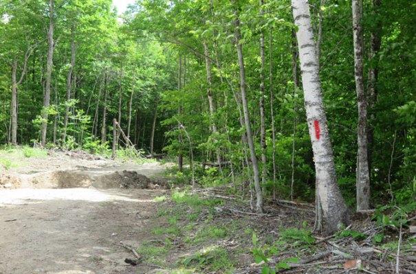 Angel Falls Trail Road