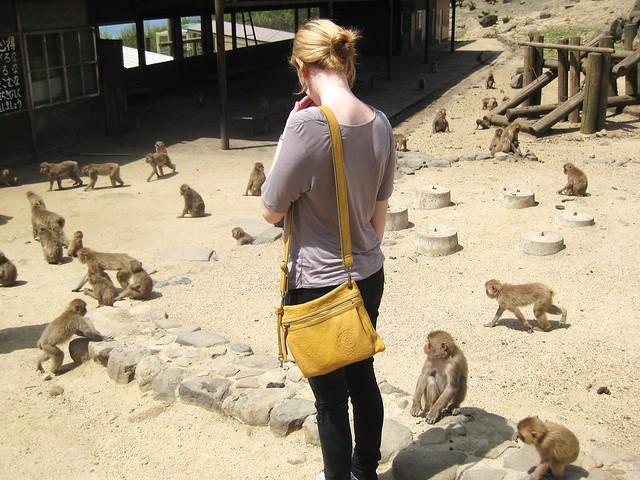 wild japanese monkeys on shodoshima island.