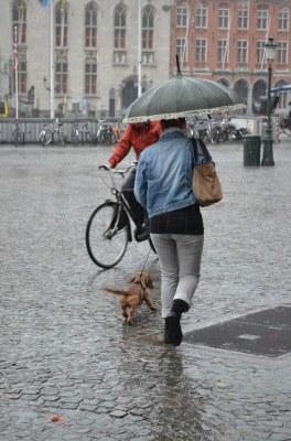 Umbrella and a dog