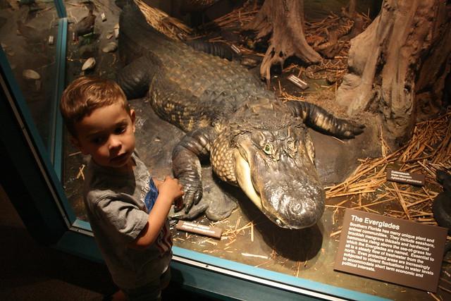 Beware the Everglades