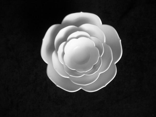Nesting Rose2
