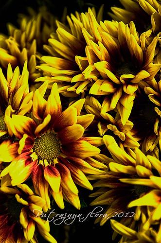 _DSC5738-flora
