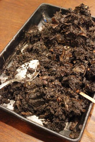 20120407. Post-harvest worm poop!