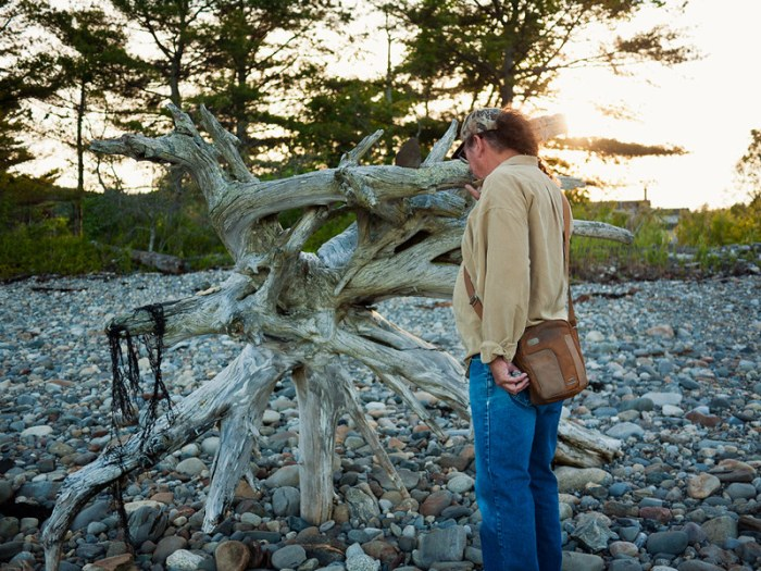 Penobscot Bay Driftwood Lincolnville Maine 4