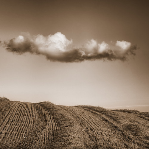 Wolds---Cloud and Field