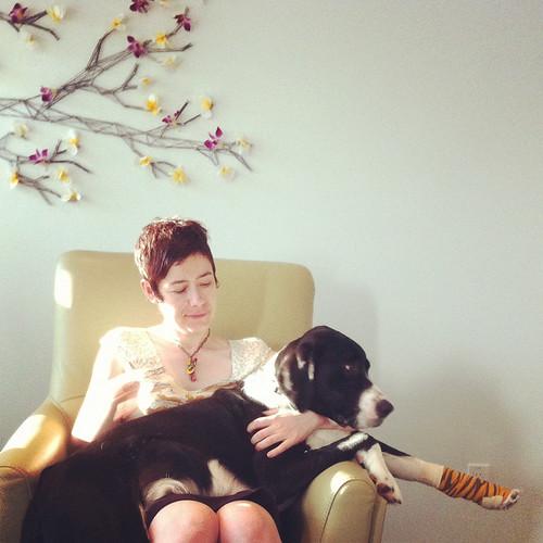 Bosco is a giant lap dog