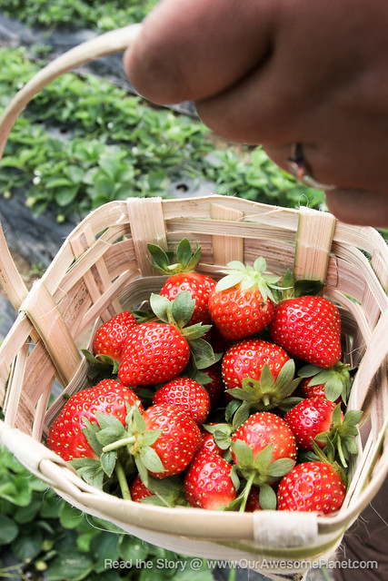 Strawberry Fields are Forever-32-1.jpg