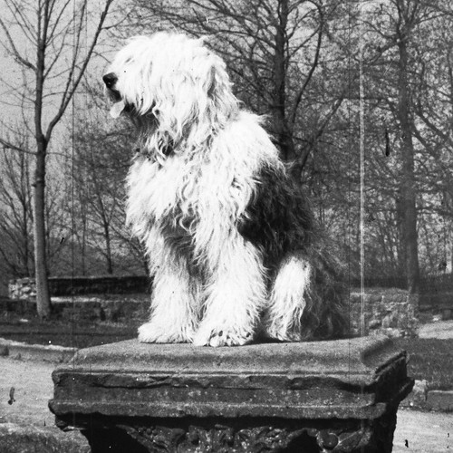 dog-throne