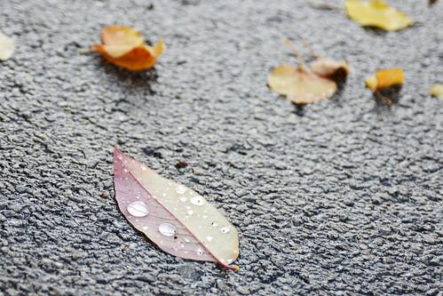 Oct10-Leaf1