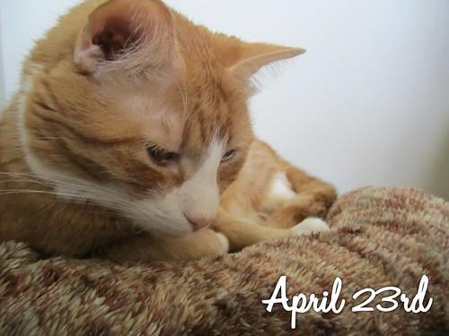 365 2012-04-23