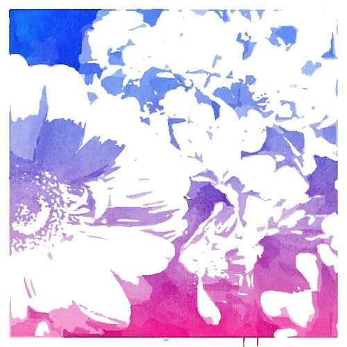 Popsicolor flowers