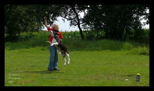 Dog Sport I
