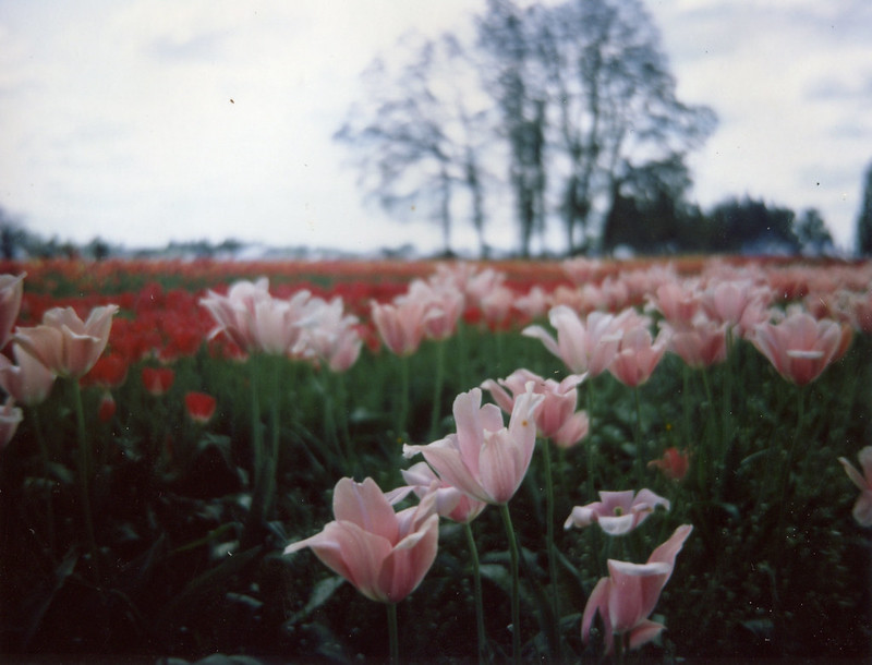 i love a good tulip festival