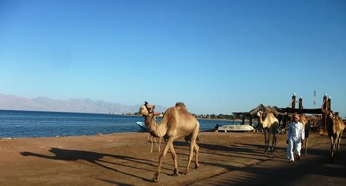 جمال بدوي في نويبع